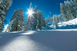 First Time to Snowbasin Resort category image.